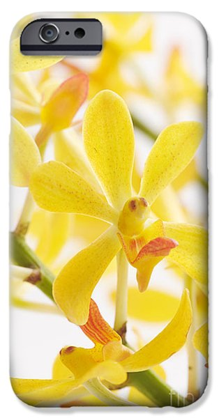 orchid bunch iPhone Case by ATIKETTA SANGASAENG