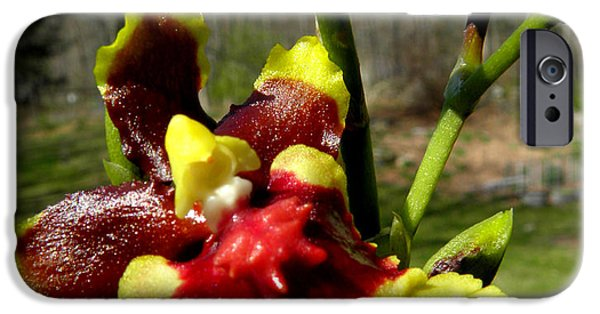 Abstract Digital Photographs iPhone Cases - Orchid In Nature iPhone Case by Kim Galluzzo Wozniak