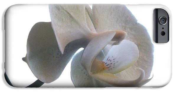 White Orchid iPhone Cases - Orchids 1 iPhone Case by Mike McGlothlen