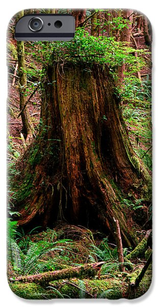 States iPhone Cases - Oregon - Ecola State Park 1 iPhone Case by Terry Elniski