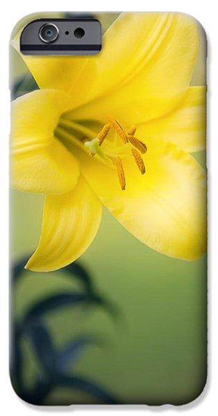 Lilium iPhone Cases - Orienpet Lily (lilium Sp.) iPhone Case by Maria Mosolova