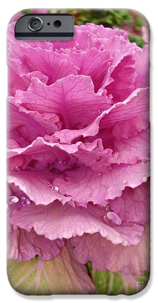 Rainy Day iPhone Cases - Ornamental Cabbage iPhone Case by Carol Groenen