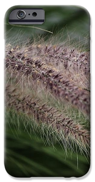 Ornamental Grass iPhone Case by Marjorie Imbeau