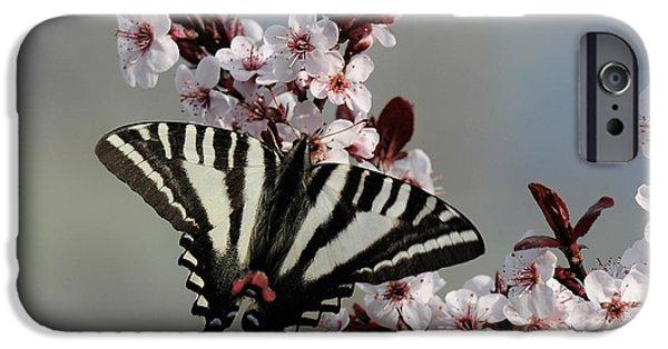 Blue Swallowtail iPhone Cases - Ornamental Plum blossoms With Zebra Swallowtail iPhone Case by Lara Ellis