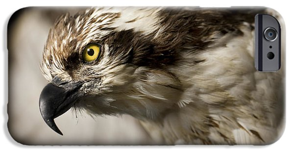 Bird Of Prey Art iPhone Cases - Osprey iPhone Case by Adam Romanowicz