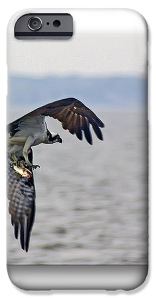 Osprey Grab iPhone Case by Brian Wallace