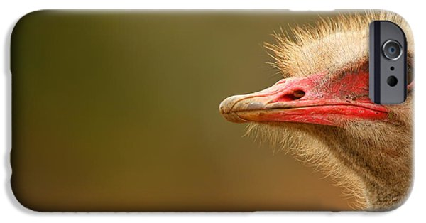 Addo iPhone Cases - Ostrich Eye iPhone Case by Bruce J Robinson