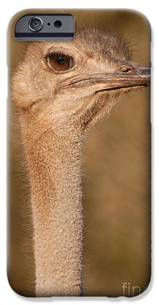 Emu iPhone Cases - Ostrich head iPhone Case by Andy Smy