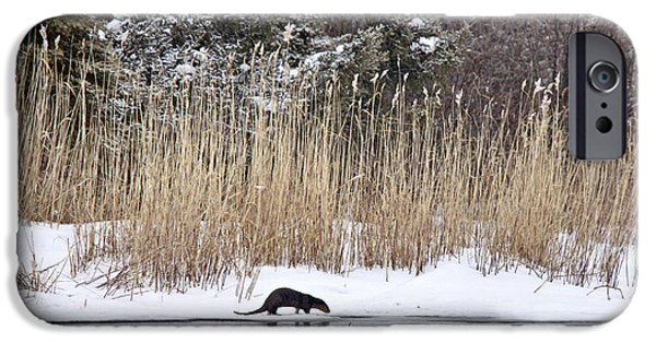 Otter Digital Art iPhone Cases - Otter in Winter iPhone Case by Mark Duffy