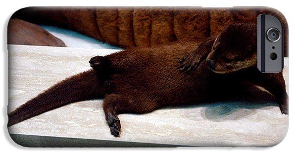 Smithsonian Museum iPhone Cases - Otter Like It iPhone Case by LeeAnn McLaneGoetz McLaneGoetzStudioLLCcom