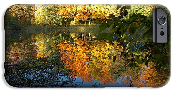 Nature Center Pond iPhone Cases - Out of the Woods iPhone Case by LeeAnn McLaneGoetz McLaneGoetzStudioLLCcom