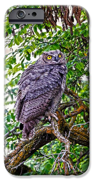 Owl In A Tree iPhone Case by Athena Mckinzie