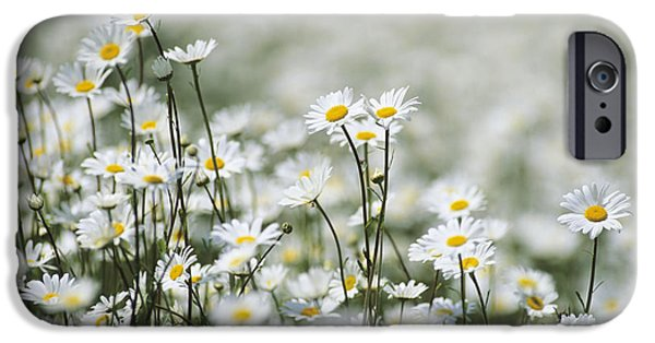 Dog Close-up iPhone Cases - Ox-eye Daisies (leucanthemum Vulgare) iPhone Case by Adrian Bicker