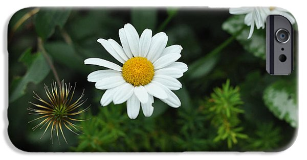 Dog And Wildflowers iPhone Cases - Oxeye Daisy Daniel Boone Inn - c9965b iPhone Case by Paul Lyndon Phillips
