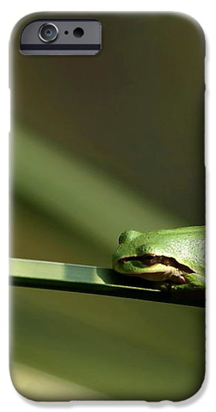 Pacific Tree Frog iPhone Case by Angie Vogel