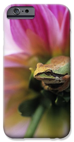 Pacific Treefrog On A Dahlia Flower iPhone Case by David Nunuk