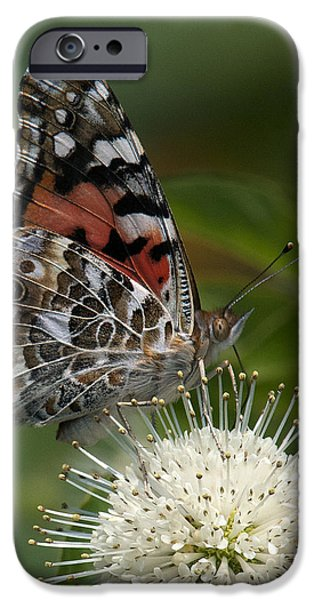 Painted Lady Butterfly DIN049 iPhone Case by Gerry Gantt