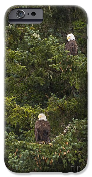 Pair of Bald Eagles iPhone Case by Darcy Michaelchuk