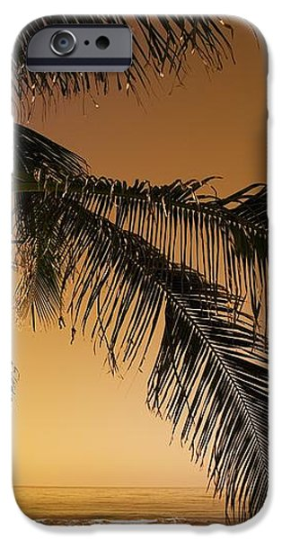 Palm Tree And Sunset In Mexico iPhone Case by Darren Greenwood