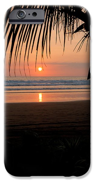 Jaco iPhone Cases - Palm Tree at Sunset iPhone Case by Anthony Doudt