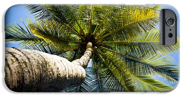 Jaco iPhone Cases - Palm Tree from Below iPhone Case by Anthony Doudt