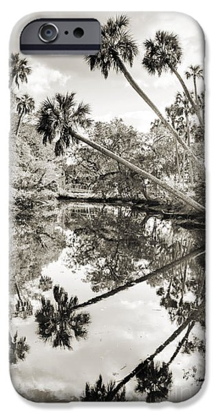 Palmettos iPhone Cases - Palm Tree Reflections iPhone Case by Dustin K Ryan