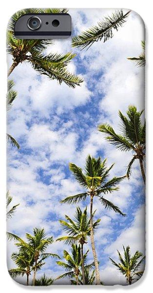 Garden Scene iPhone Cases - Palm trees iPhone Case by Elena Elisseeva