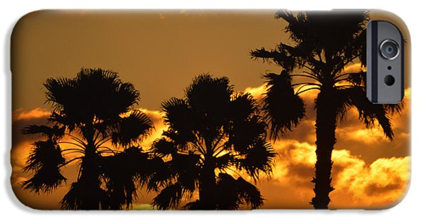 Reflection Of Sun In Clouds iPhone Cases - Palm Trees in Sunrise iPhone Case by Susanne Van Hulst
