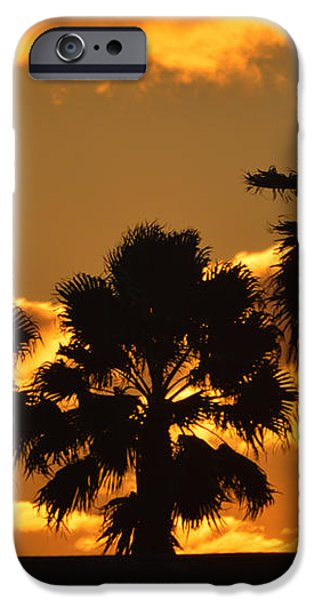 Palm Trees in Sunrise iPhone Case by Susanne Van Hulst