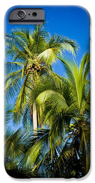 Jaco iPhone Cases - Palm Trees in the Sun iPhone Case by Anthony Doudt