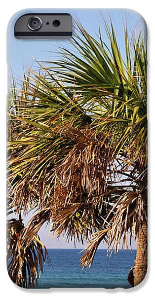 Palm Trees iPhone Case by Sandy Keeton