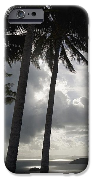Whitsunday iPhone Cases - Palm Trees Silhouetted Against Dark iPhone Case by Axiom Photographic