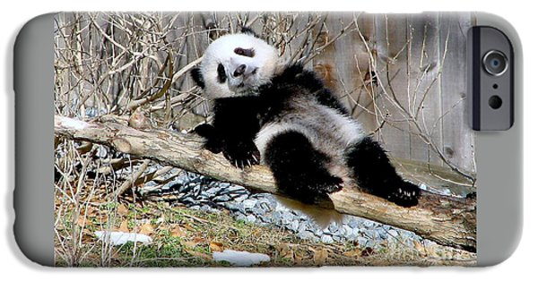 Smithsonian iPhone Cases - Panda iPhone Case by Eva Kaufman