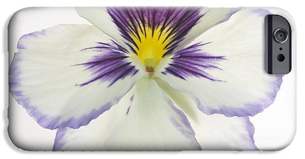 Pansy iPhone Cases - Pansy 2 iPhone Case by Tony Cordoza