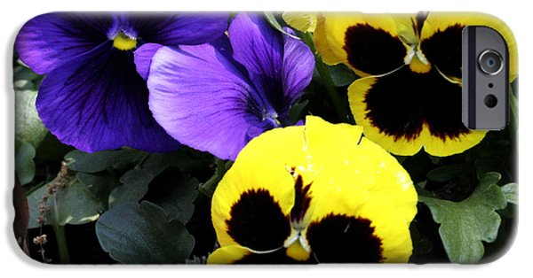 Pansy iPhone Cases - Pansy Boys iPhone Case by Paul Anderson