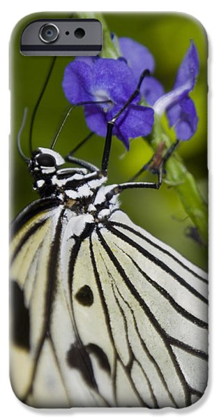 Paper Kite Butterfly iPhone Case by Heather Applegate