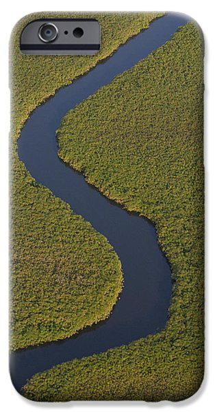 Papyrus iPhone Cases - Papyrus Cuperus Papyrus Swamps iPhone Case by Pete Oxford