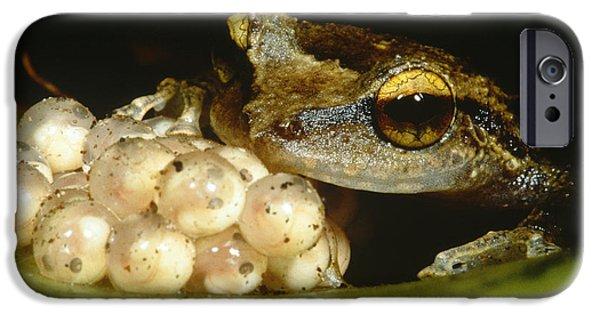 Parental Care iPhone Cases - Parental Care By Tree Frog iPhone Case by Dante Fenolio
