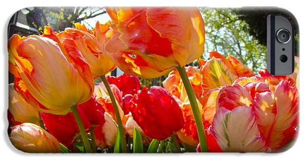 Phillie iPhone Cases - Parrot Tulips in Philadelphia iPhone Case by Mother Nature
