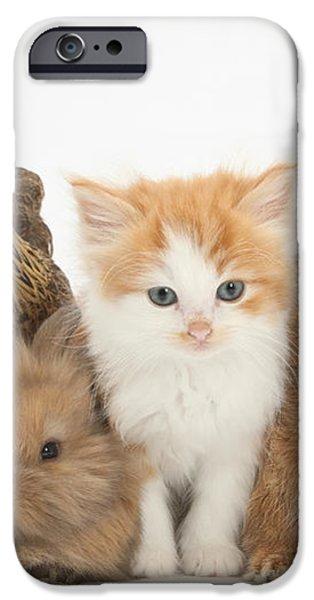 Partridge Pekin Bantam With Kitten iPhone Case by Mark Taylor