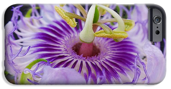 Passionflower iPhone Cases - Passion Flora iPhone Case by Juergen Roth