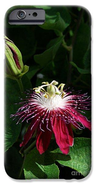 Passion Flower iPhone Case by Eva Kaufman