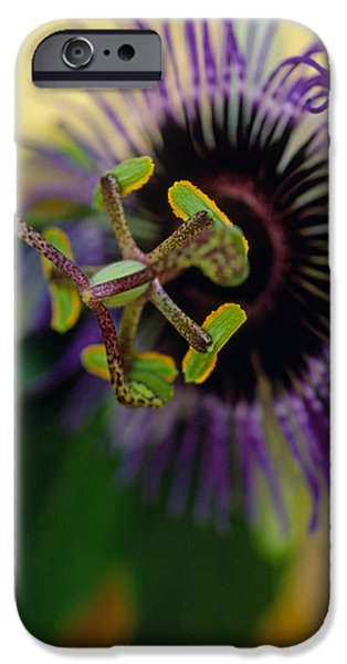PASSIONate Flower iPhone Case by Kathy Yates