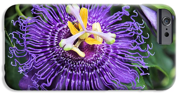Passionflower iPhone Cases - Passionflower Purple iPhone Case by Rosalie Scanlon