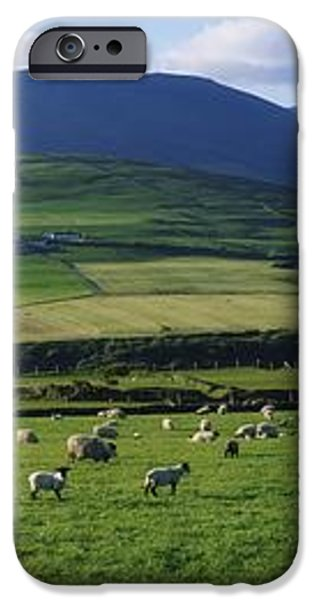 Pastoral Scene Near Anascual, Dingle iPhone Case by The Irish Image Collection