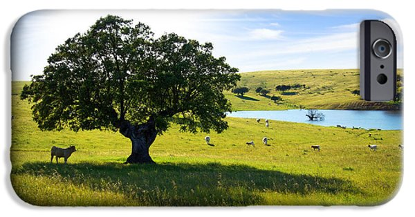 Rural Landscapes iPhone Cases - Pasturing cows iPhone Case by Carlos Caetano