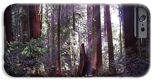 Santa Cruz Art iPhone Cases - Path by an Ancient Redwood iPhone Case by Laura Iverson