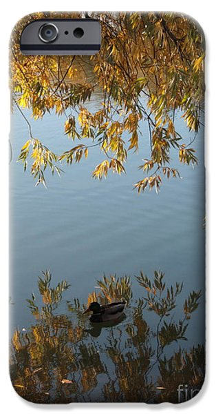 Beautiful Autumn Day iPhone Cases - Peaceful Autumn Day iPhone Case by Carol Groenen