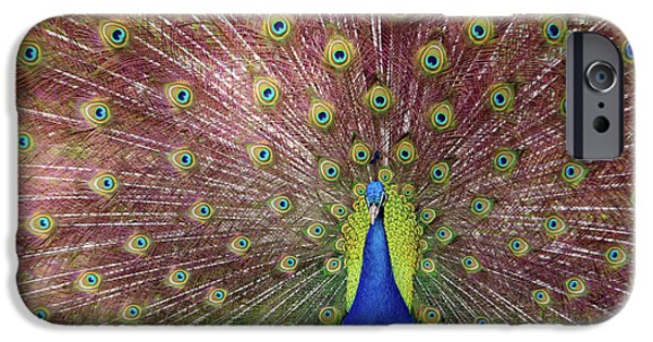 Peafowl iPhone Cases - Peacock iPhone Case by Carlos Caetano