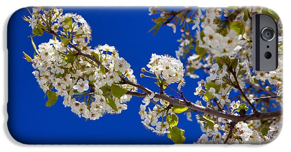 Fruit Tree iPhone Cases - Pear Spring iPhone Case by Chad Dutson